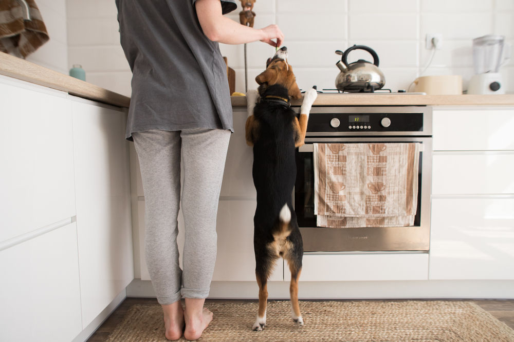 Lady in kitchen with dog (Pet-Friendly Kitche Design)